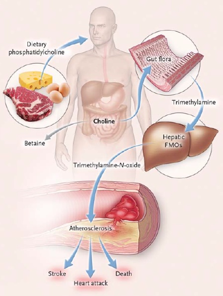 illustration of items in our gut